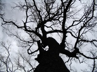 ashen_tree-01-thm.jpg